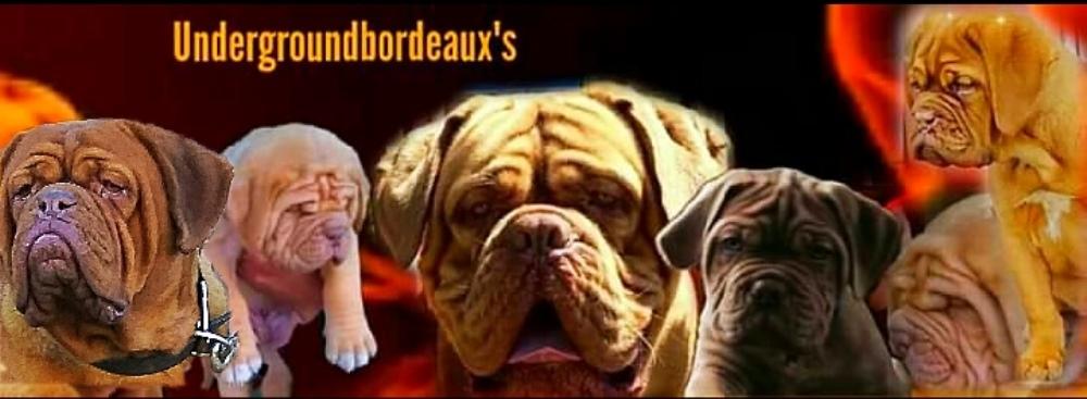 Undergroundbordeaux's Dogue de boredeaux
